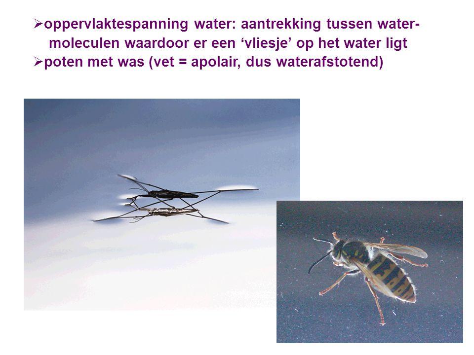 oppervlaktespanning water: aantrekking tussen water- moleculen waardoor er een 'vliesje' op het water ligt