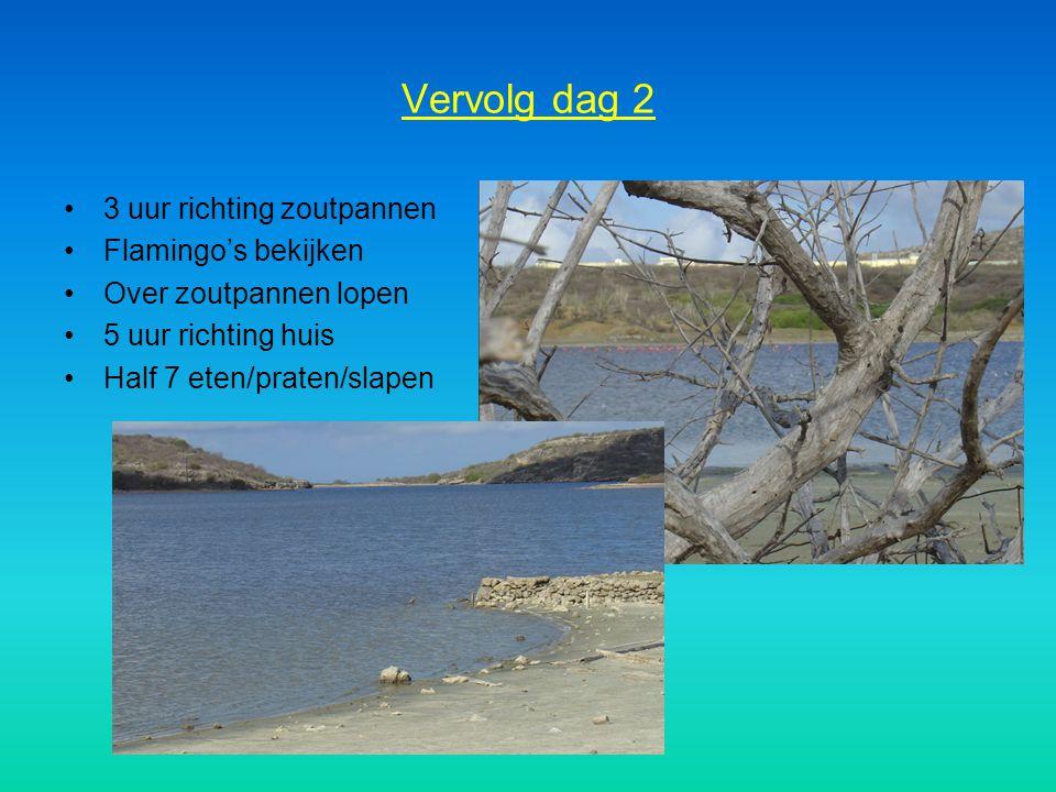 Vervolg dag 2 3 uur richting zoutpannen Flamingo's bekijken
