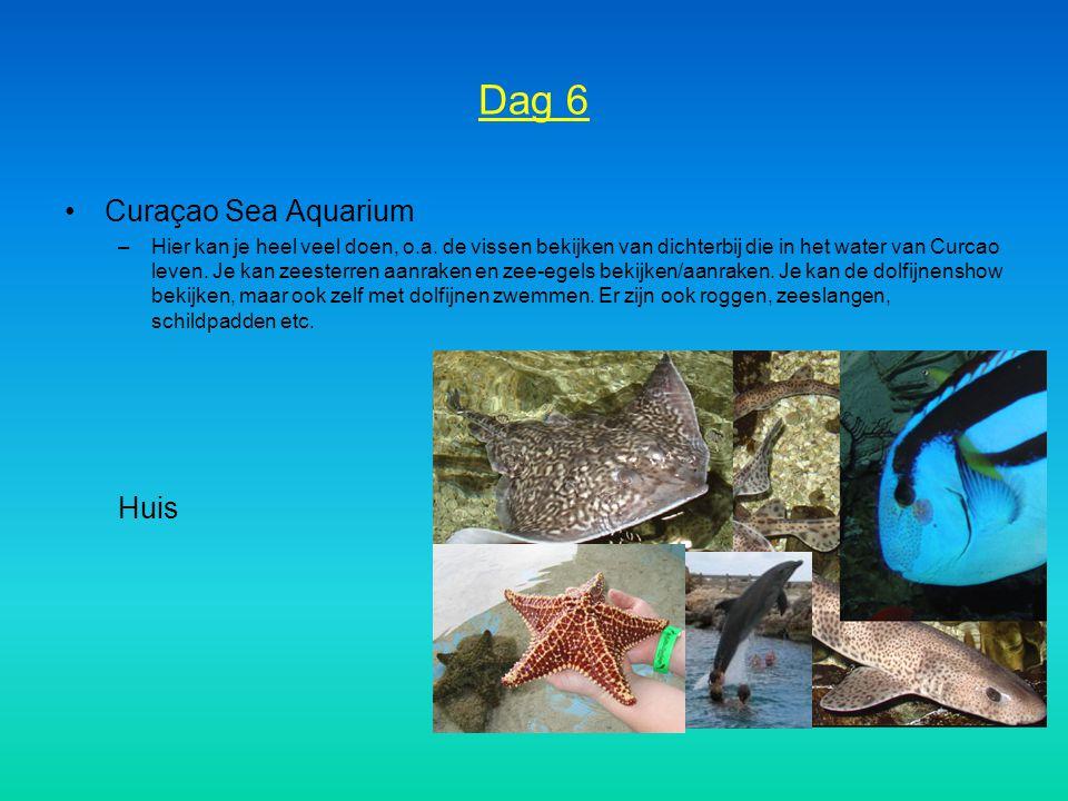 Dag 6 Curaçao Sea Aquarium Huis