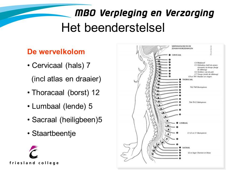 Het beenderstelsel De wervelkolom Cervicaal (hals) 7