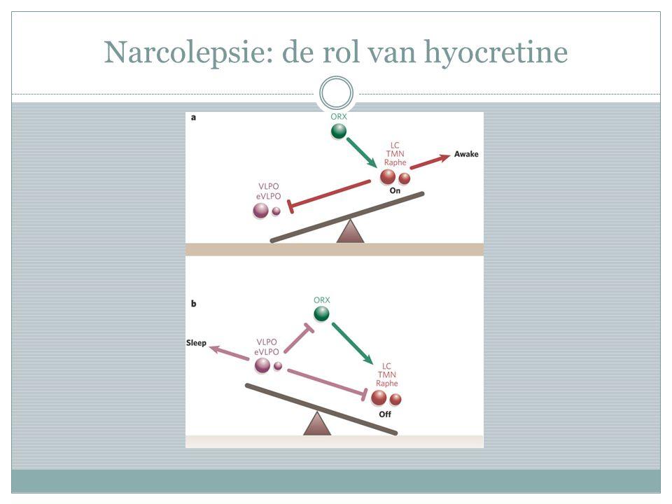Narcolepsie: de rol van hyocretine