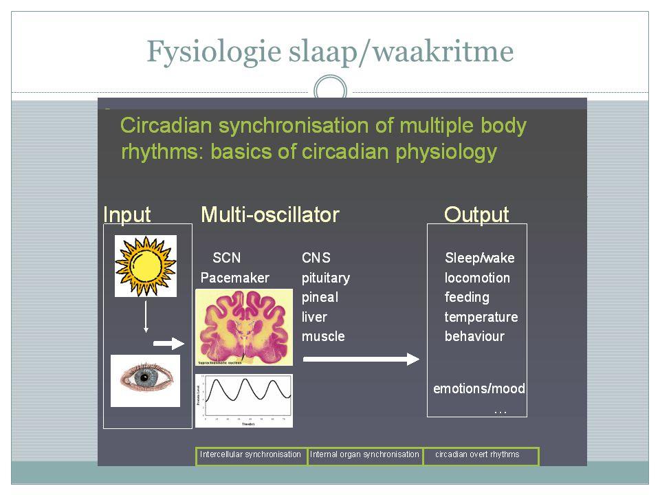 Fysiologie slaap/waakritme