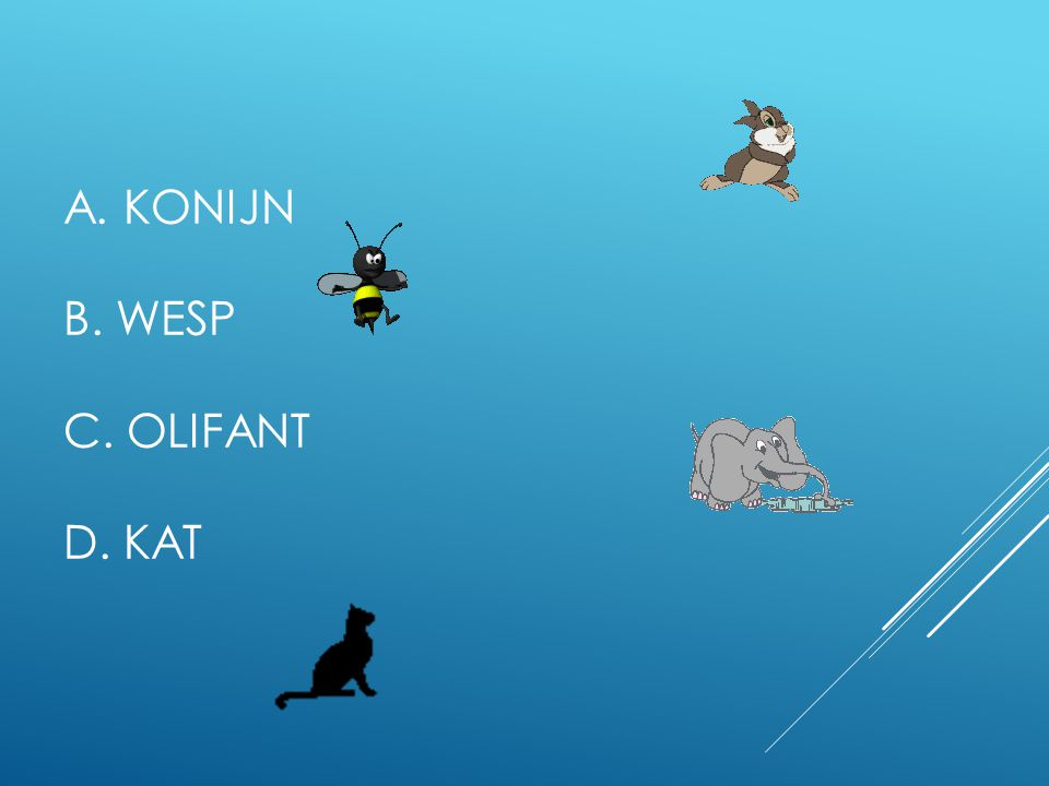 A. Konijn B. Wesp C. Olifant D. Kat