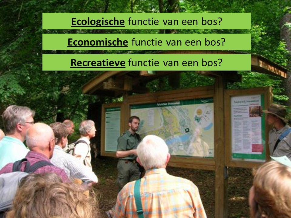 Ecologische functie van een bos