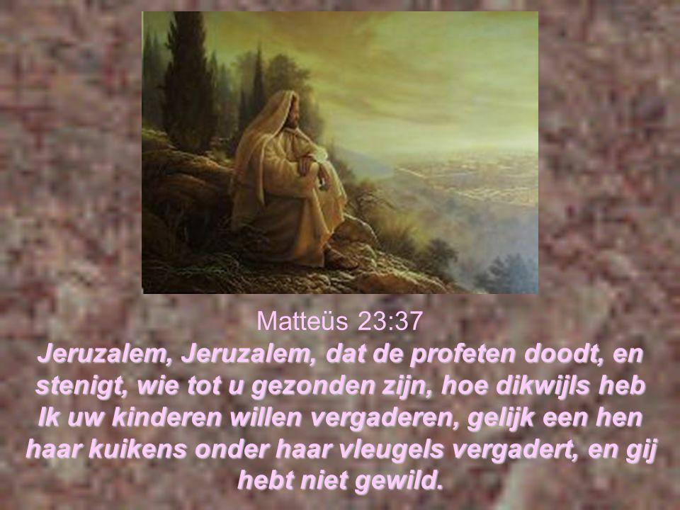 Matteüs 23:37 Jeruzalem, Jeruzalem, dat de profeten doodt, en stenigt, wie tot u gezonden zijn, hoe dikwijls heb Ik uw kinderen willen vergaderen, gelijk een hen haar kuikens onder haar vleugels vergadert, en gij hebt niet gewild.