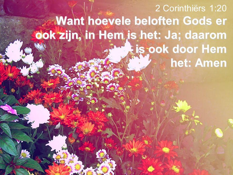 2 Corinthiërs 1:20 Want hoevele beloften Gods er ook zijn, in Hem is het: Ja; daarom is ook door Hem het: Amen