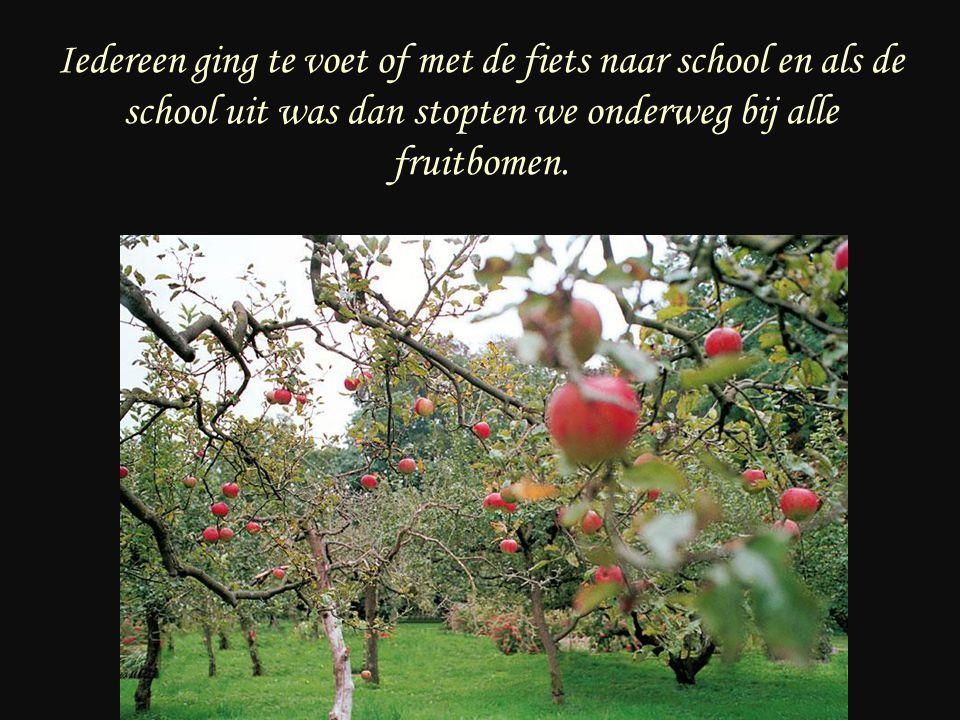 Iedereen ging te voet of met de fiets naar school en als de school uit was dan stopten we onderweg bij alle fruitbomen.