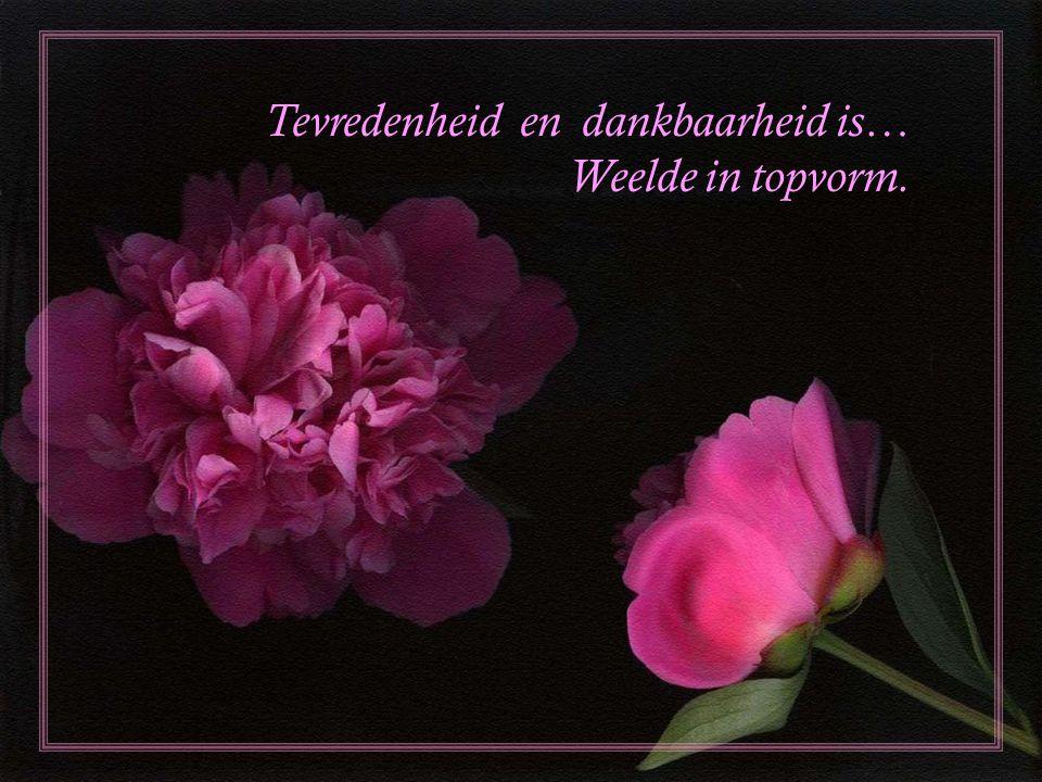 Tevredenheid en dankbaarheid is… Weelde in topvorm.