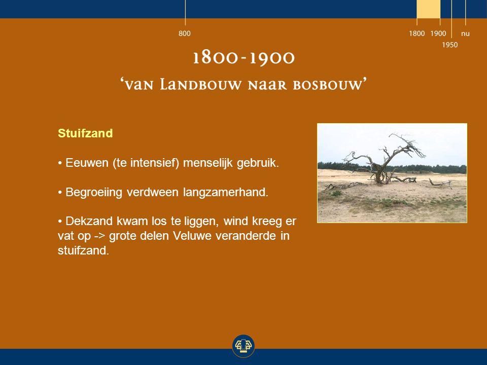 Stuifzand Eeuwen (te intensief) menselijk gebruik. Begroeiing verdween langzamerhand.