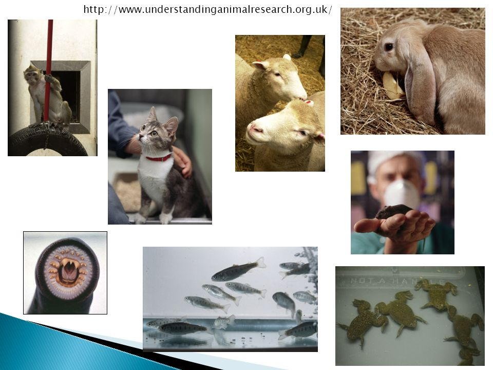 http://www.understandinganimalresearch.org.uk/