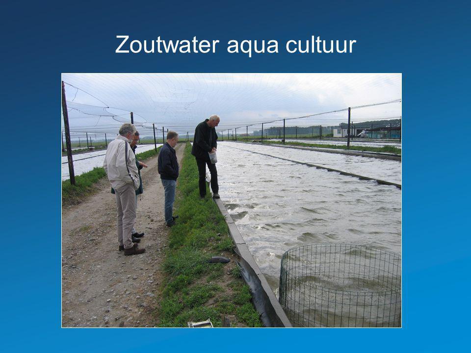Zoutwater aqua cultuur
