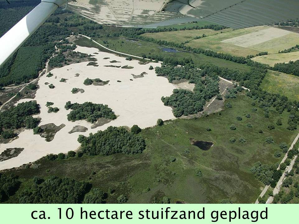 ca. 10 hectare stuifzand geplagd