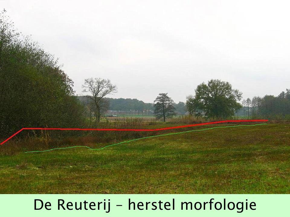De Reuterij – herstel morfologie