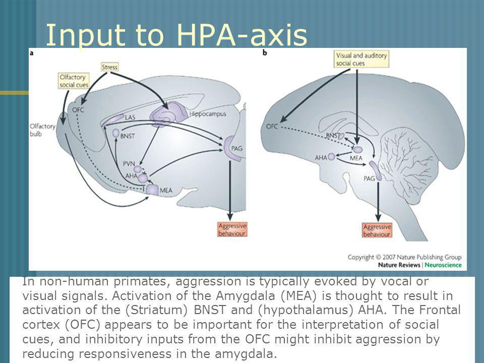 Input to HPA-axis