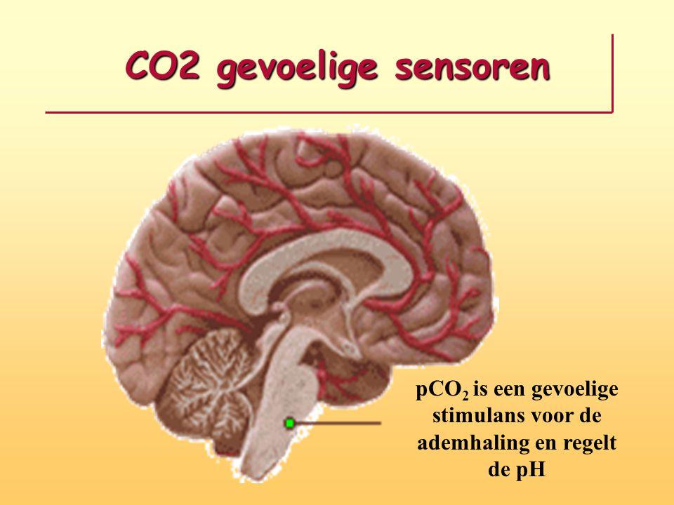 pCO2 is een gevoelige stimulans voor de ademhaling en regelt de pH