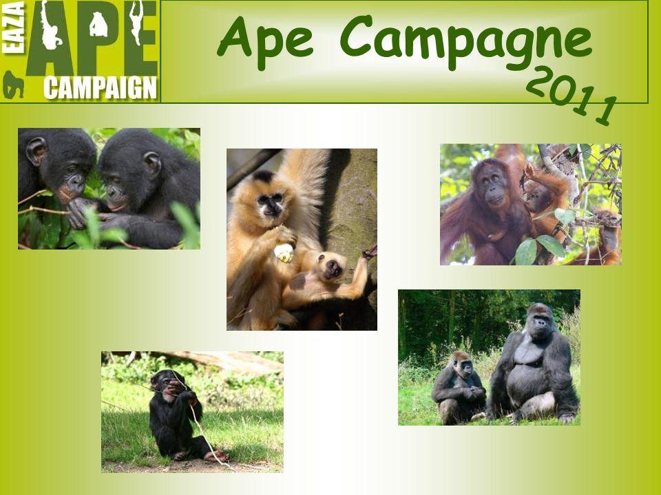 Ape Campagne 2011.