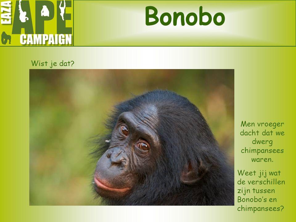Men vroeger dacht dat we dwerg chimpansees waren.