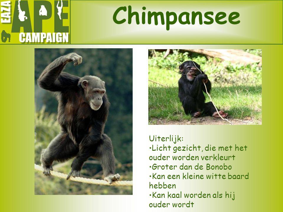 Chimpansee Uiterlijk: