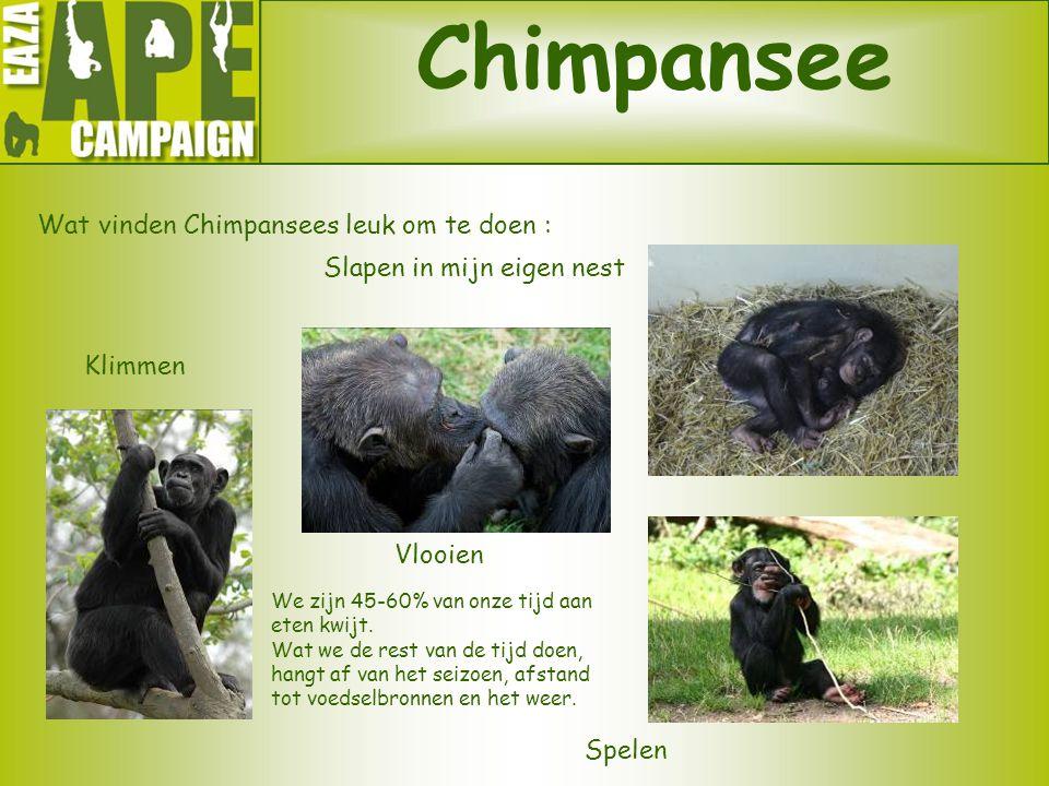Chimpansee Wat vinden Chimpansees leuk om te doen :