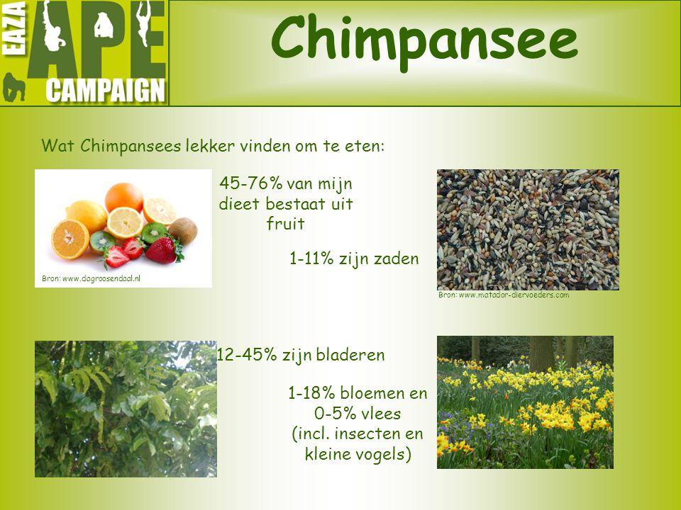 Chimpansee Wat Chimpansees lekker vinden om te eten: