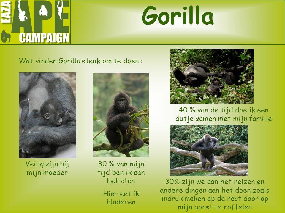Gorilla Wat vinden Gorilla's leuk om te doen :