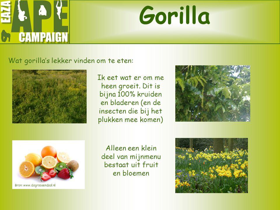 Gorilla Wat gorilla's lekker vinden om te eten: