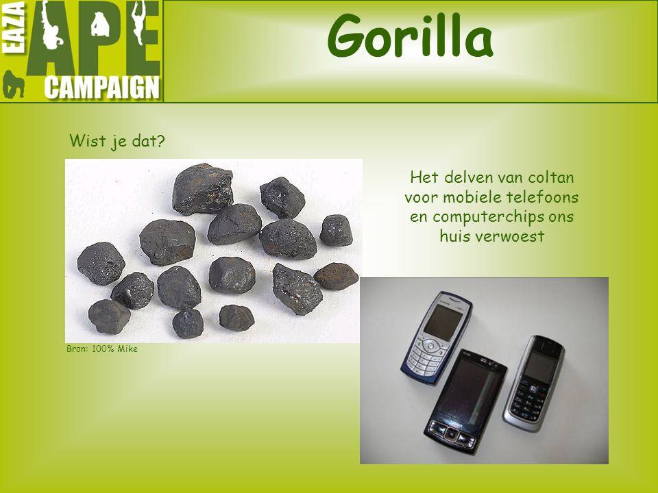 Gorilla Wist je dat Het delven van coltan voor mobiele telefoons en computerchips ons huis verwoest.