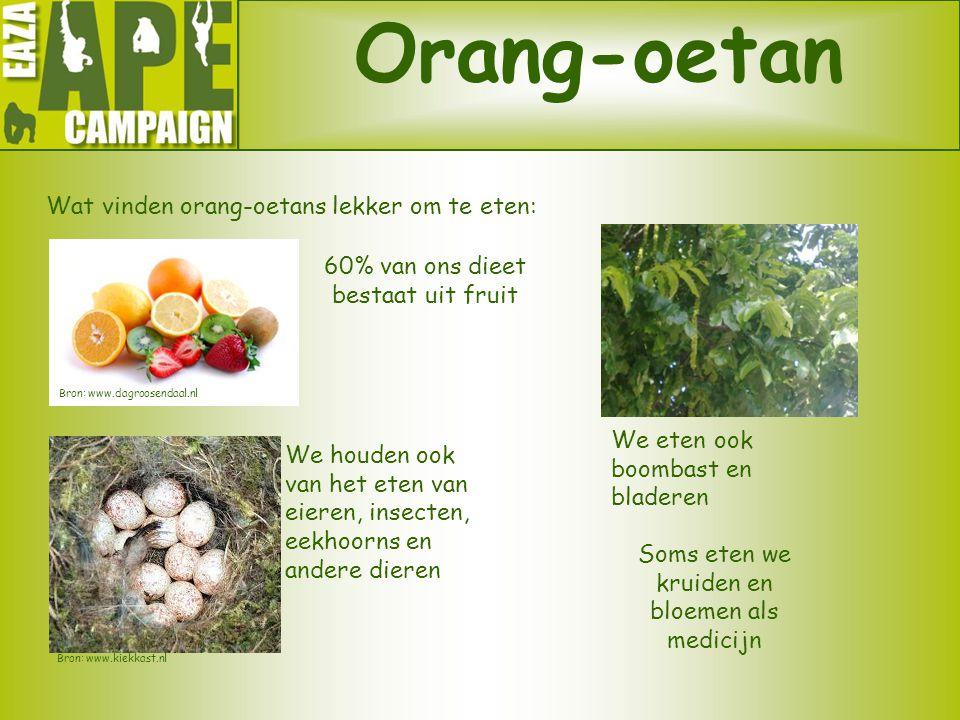 Orang-oetan Wat vinden orang-oetans lekker om te eten: