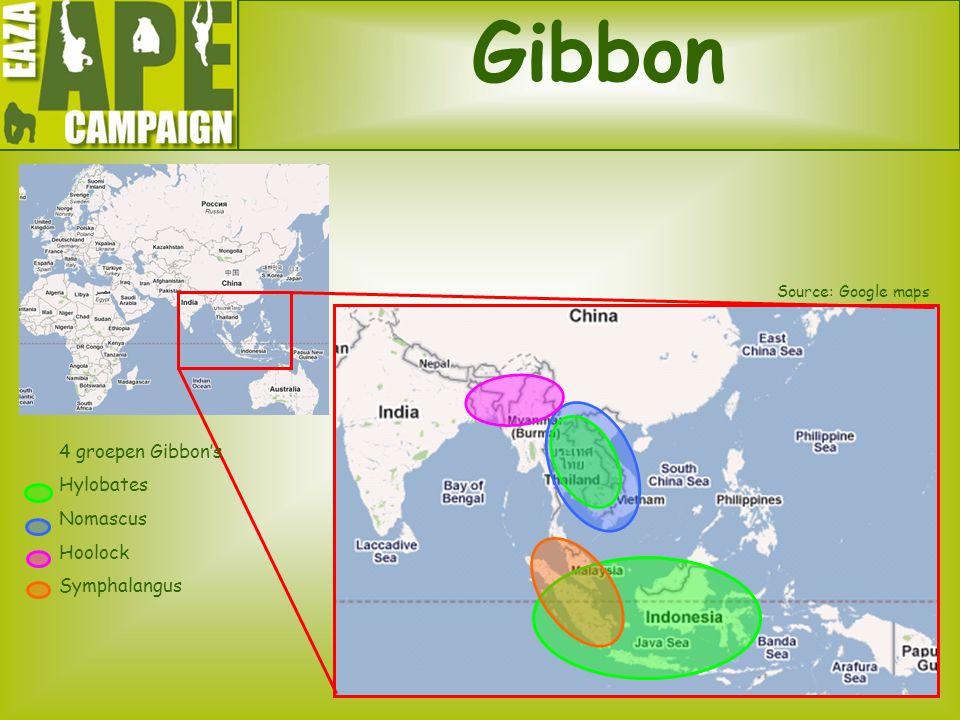 Gibbon 4 groepen Gibbon's Hylobates Nomascus Hoolock Symphalangus