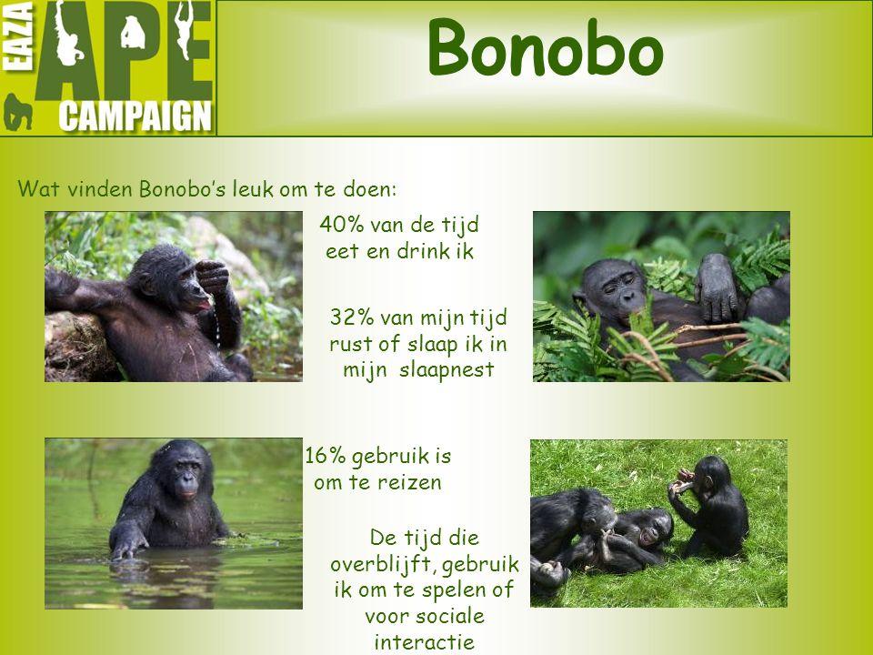 Bonobo Wat vinden Bonobo's leuk om te doen: