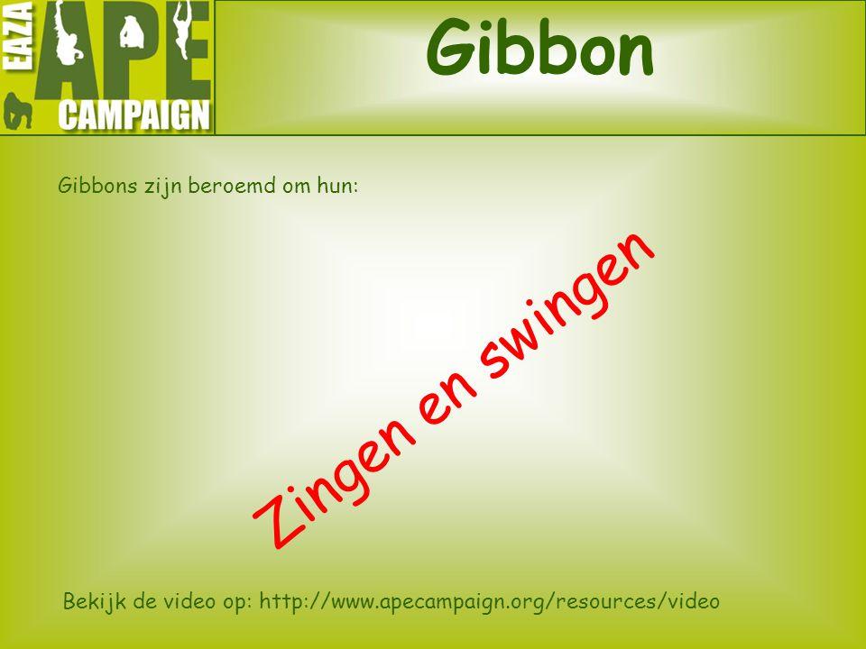 Gibbon Zingen en swingen Gibbons zijn beroemd om hun:
