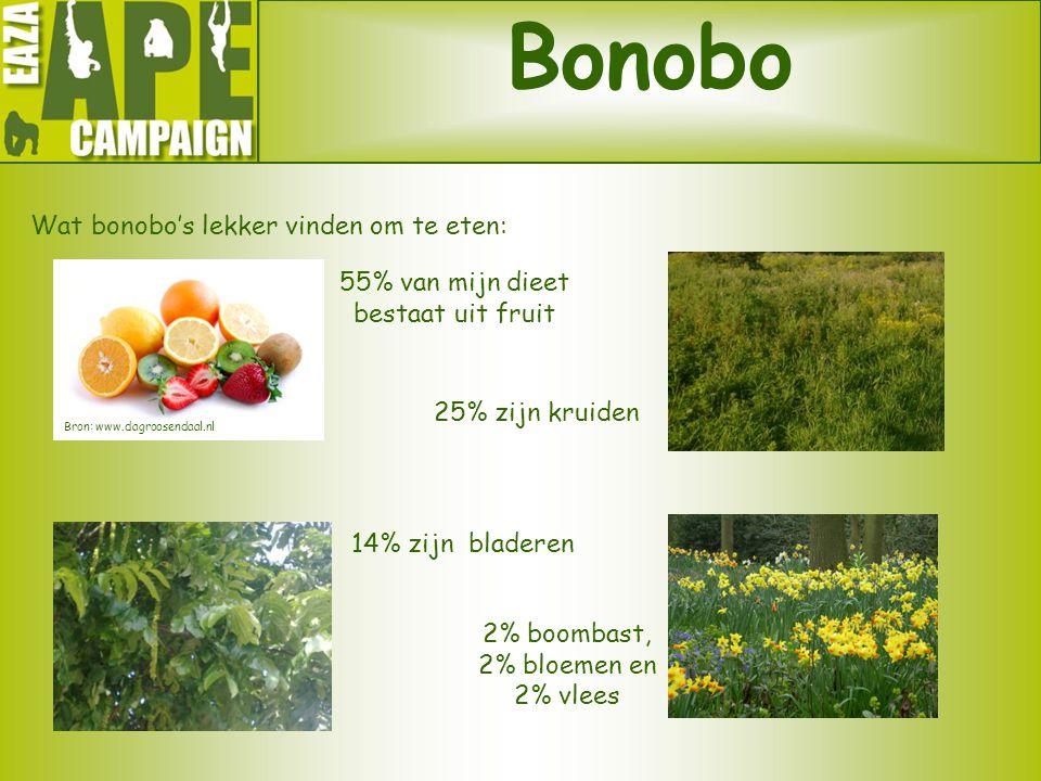 Bonobo Wat bonobo's lekker vinden om te eten: