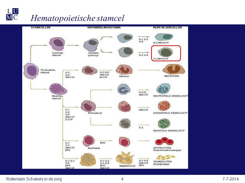 Hematopoietische stamcel