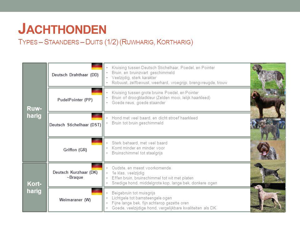 Jachthonden Types – Staanders – Duits (1/2) (Ruwharig, Kortharig)