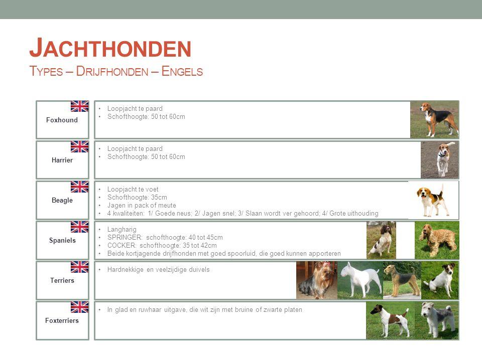 Jachthonden Types – Drijfhonden – Engels