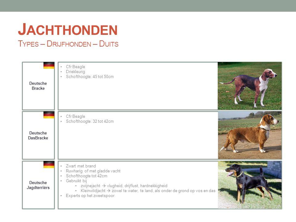 Jachthonden Types – Drijfhonden – Duits