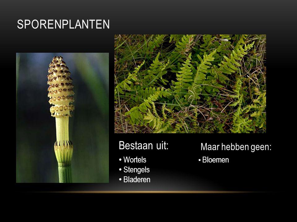 Sporenplanten Bestaan uit: Maar hebben geen: Wortels Stengels Bladeren