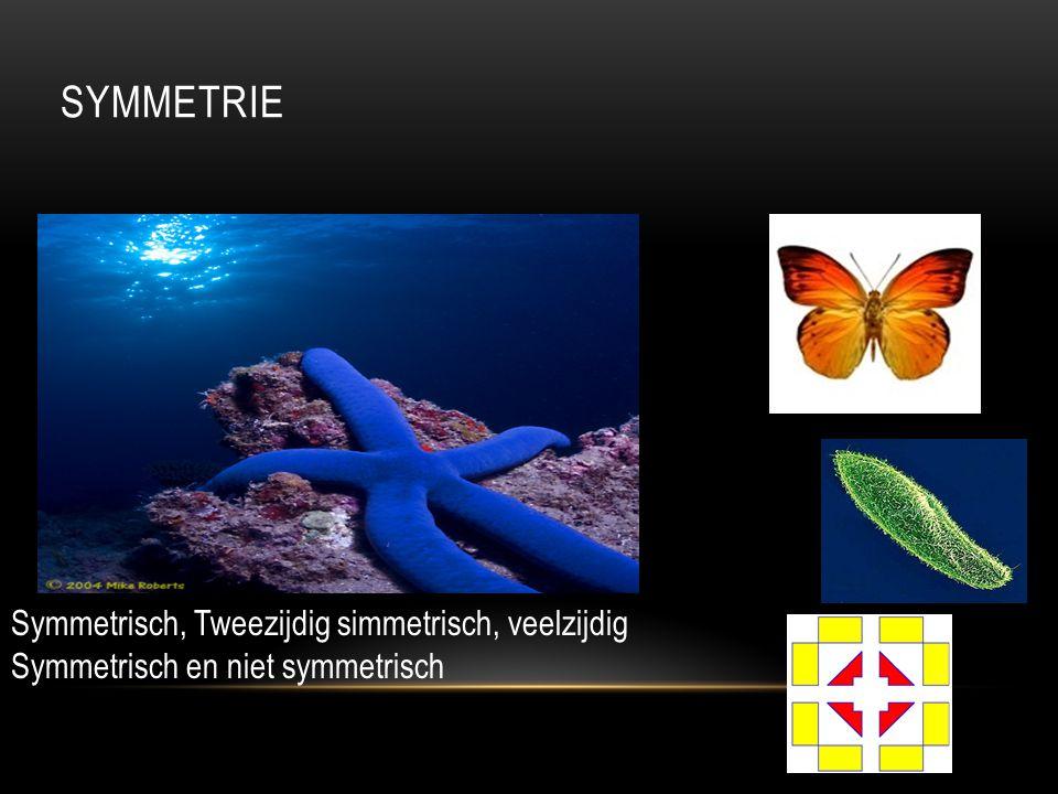 Symmetrie Symmetrisch, Tweezijdig simmetrisch, veelzijdig