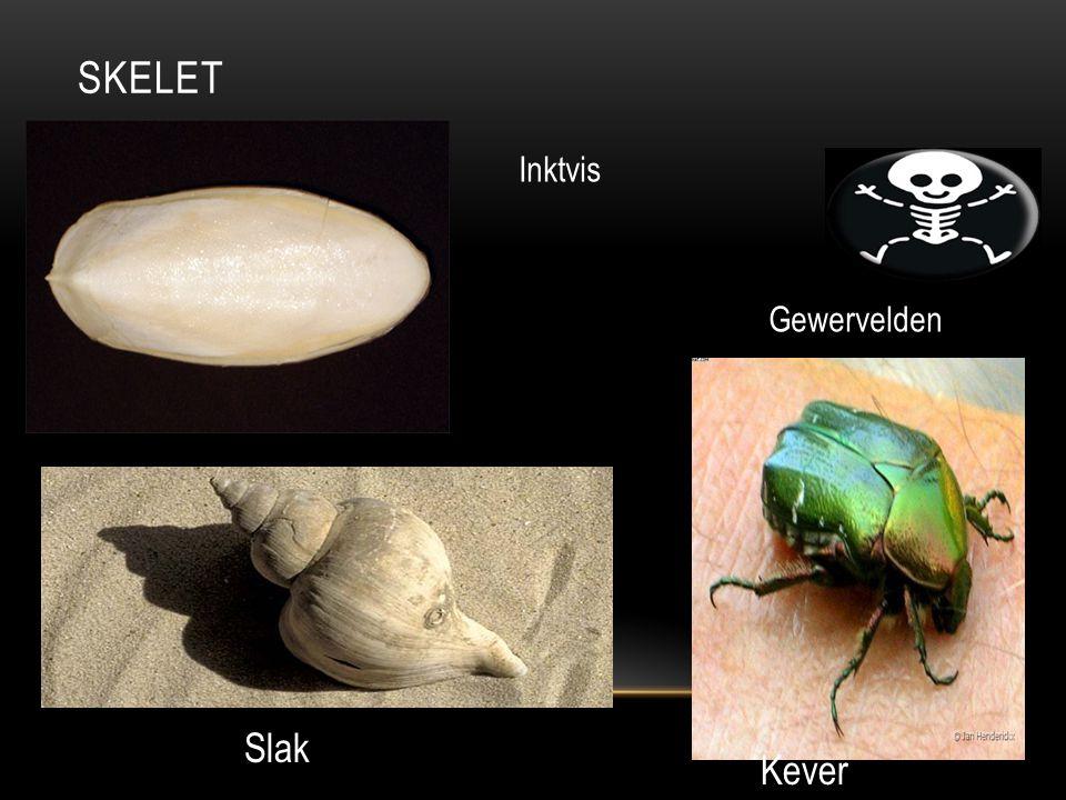 Skelet Inktvis Gewervelden Slak Kever
