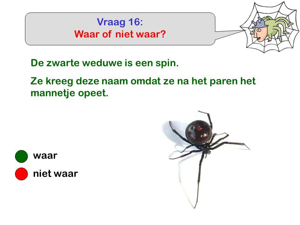 Vraag 16: Waar of niet waar De zwarte weduwe is een spin. Ze kreeg deze naam omdat ze na het paren het mannetje opeet.