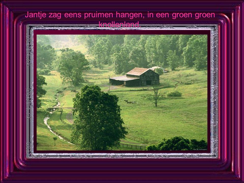 Jantje zag eens pruimen hangen, in een groen groen knollenland.