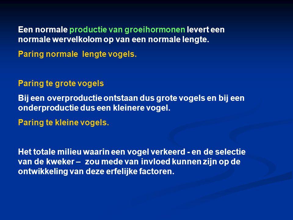 Een normale productie van groeihormonen levert een normale wervelkolom op van een normale lengte.