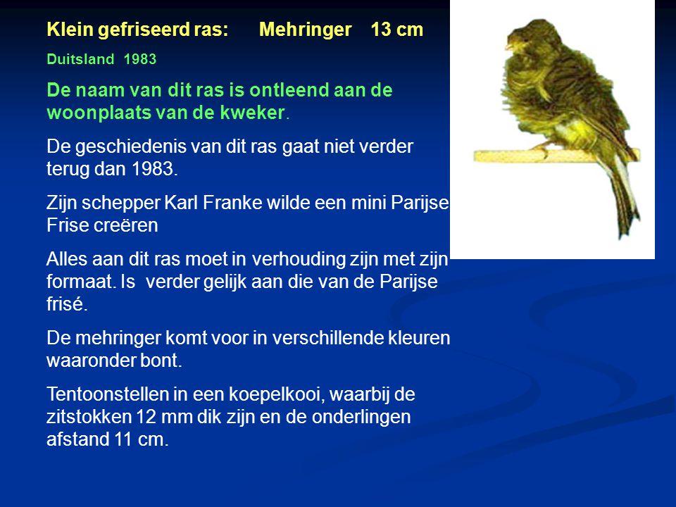 Klein gefriseerd ras: Mehringer 13 cm