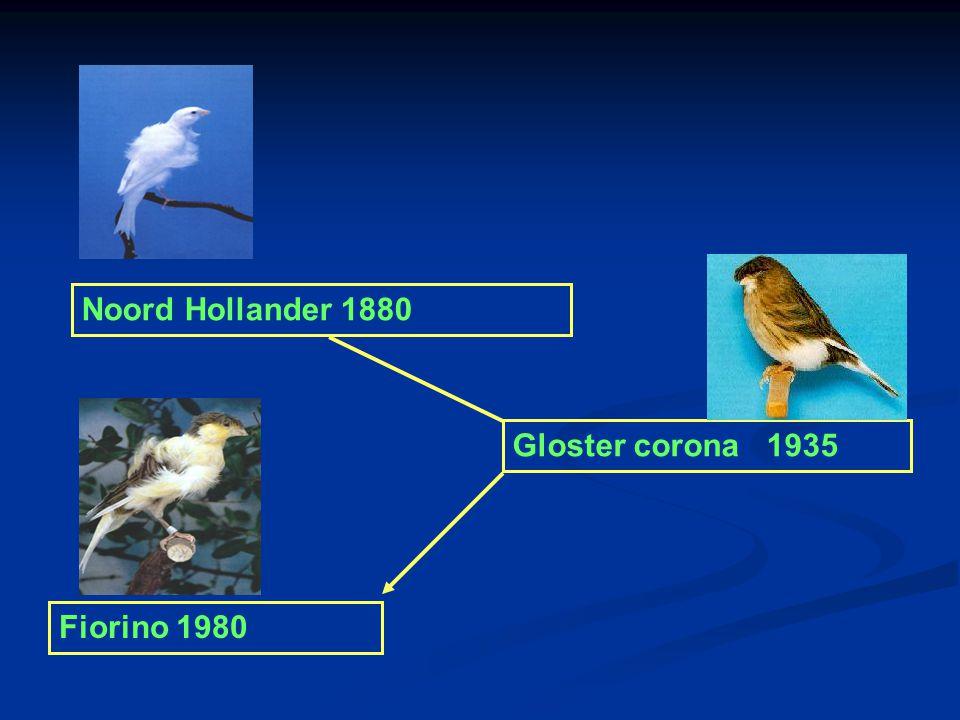 Noord Hollander 1880 Gloster corona 1935 Fiorino 1980