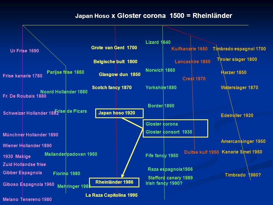 Japan Hoso x Gloster corona 1500 = Rheinländer