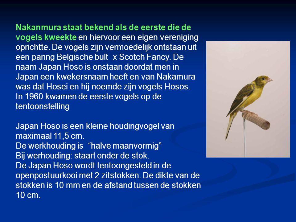 Nakanmura staat bekend als de eerste die de vogels kweekte en hiervoor een eigen vereniging oprichtte. De vogels zijn vermoedelijk ontstaan uit een paring Belgische bult x Scotch Fancy. De naam Japan Hoso is onstaan doordat men in Japan een kwekersnaam heeft en van Nakamura was dat Hosei en hij noemde zijn vogels Hosos.