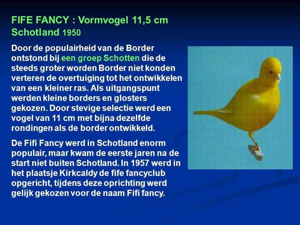 FIFE FANCY : Vormvogel 11,5 cm Schotland 1950