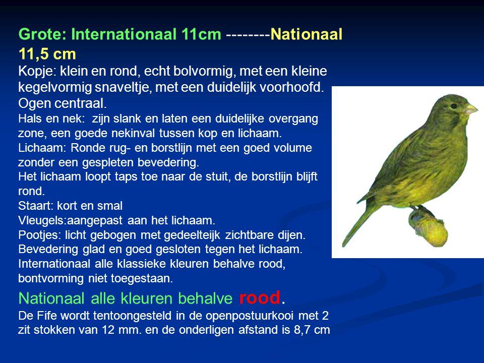 Grote: Internationaal 11cm --------Nationaal 11,5 cm