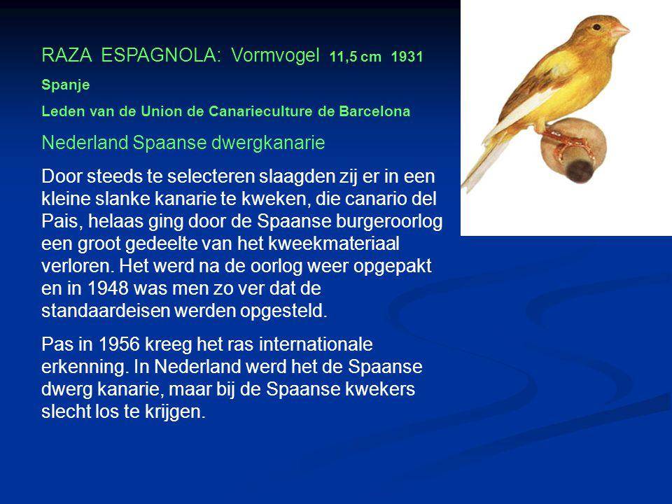 RAZA ESPAGNOLA: Vormvogel 11,5 cm 1931