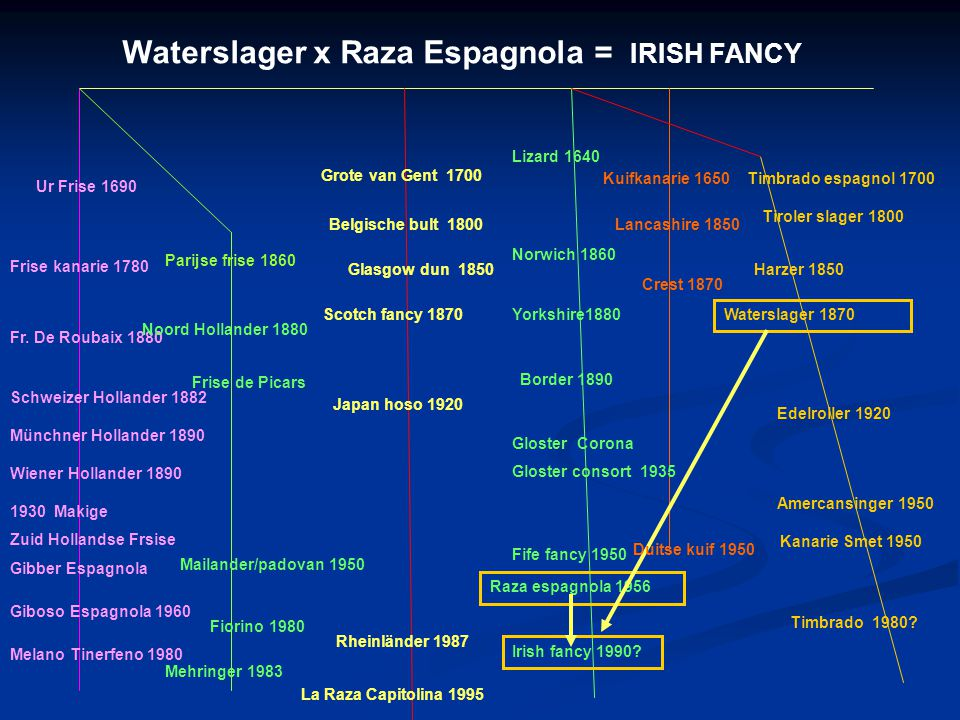 Waterslager x Raza Espagnola = IRISH FANCY